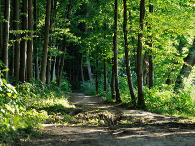DEVELOPING A PLAN TO CARE FOR YOUR FOREST