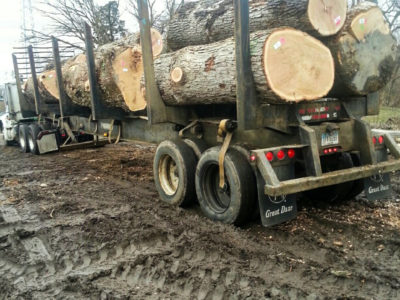 Load of White oak